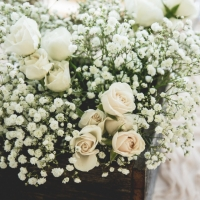 beautiful soft white palette of flowers