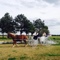 horse and carriage at House Plantation