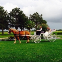 horse and carriage at house plantation.JPG