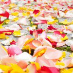 rose petals wedding ideas